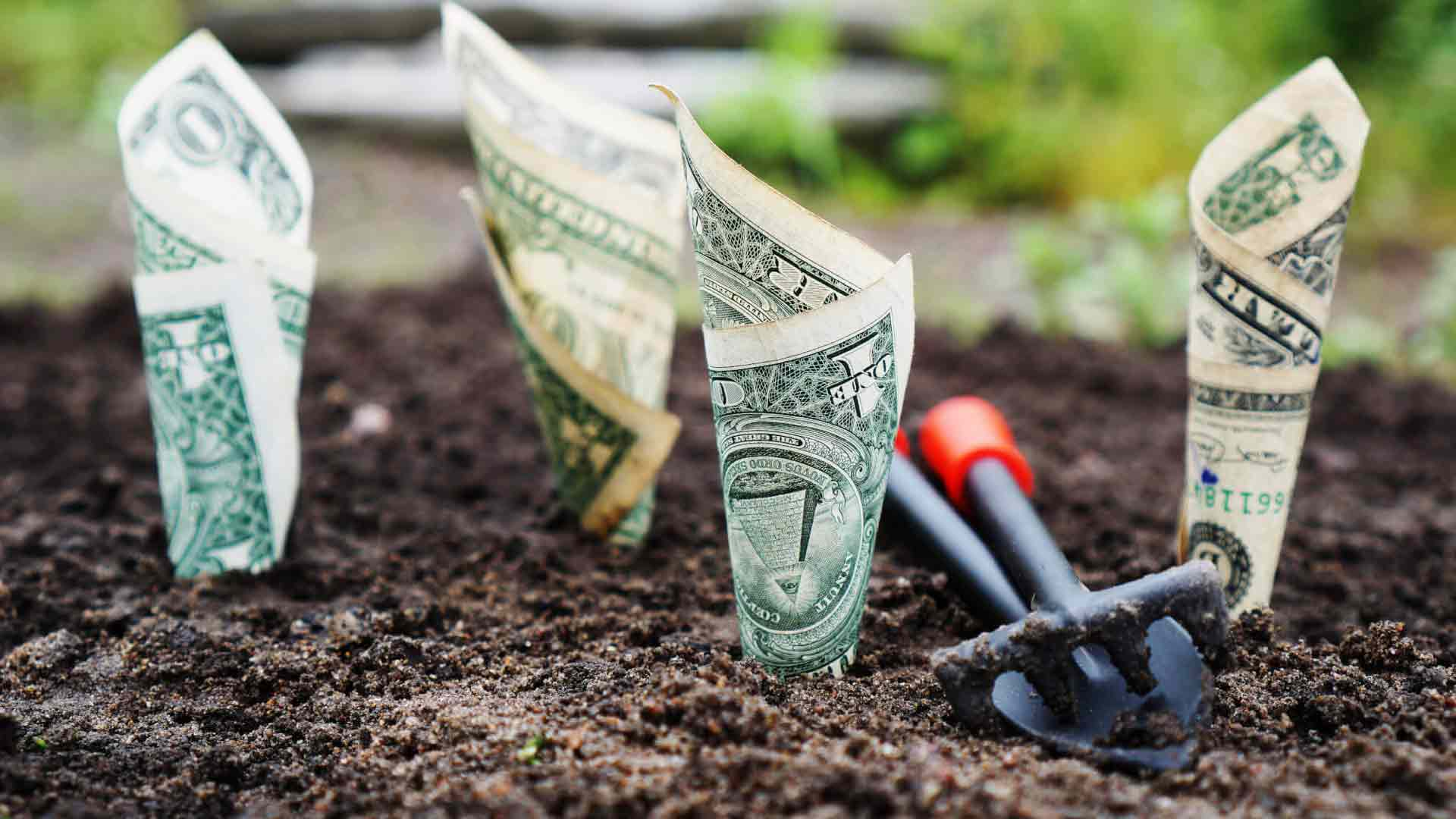 dollar bills planted in soil for real estate equity crowdfunding course